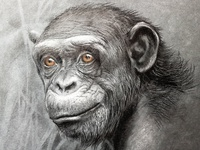 Monkey s3 5