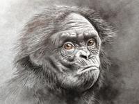 Monkey s3 6
