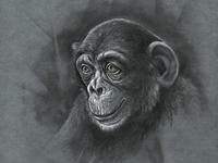 Monkey s3 7