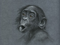 monkey s3 8