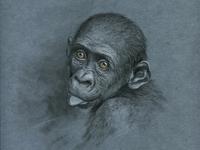 Monkey s3 9