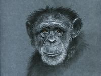 Monkey s3 12