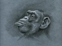 Monkey s3 13