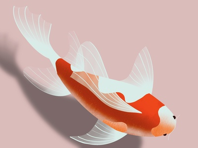 koi fish illustration digitalart fish