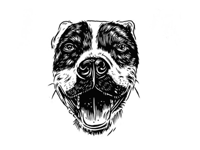 Walter illustration dog portrait pit bull