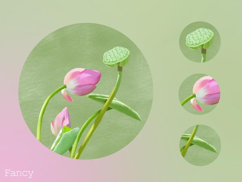 Lotus flower lotus chinese china