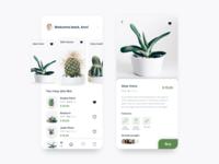Succulent shop concept