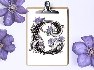 Victorian Floral Alphabet - C (Clematis) purple font medieval types victorian letters lettering clematis flower alphabet floral botanical art illustration typography