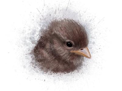 A Bird Study illustration bird sparrow brown brush study