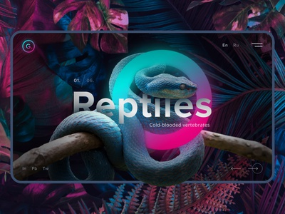 Reptiles Web Design photoshop figma concept design concept website web design ux ui