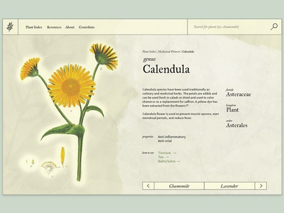 Plant Guide Website guide website web design plants witchy ui interface web
