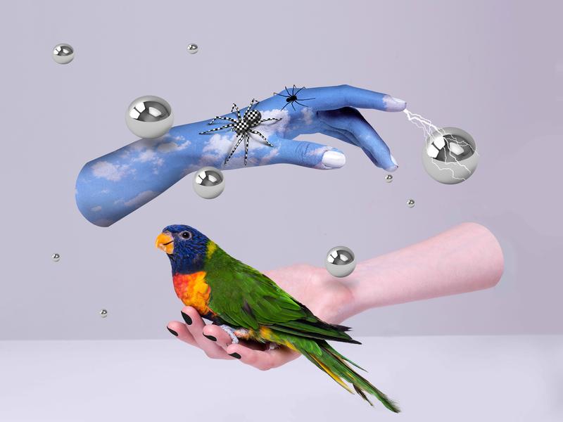 Fantasy illustration animal art draw hands animal parrot surrealism surreal fantasy printdesign setdesign illustration graphicdesign graphic funny design contemporaryart contemporary art