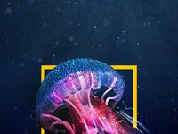 Subtilstudio under the sea
