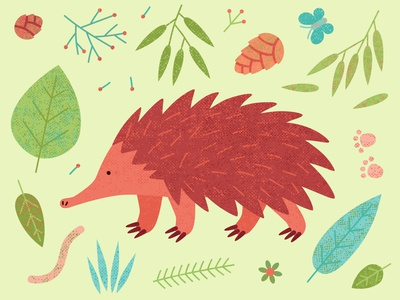 Echidna vector wild animal exotic endemic echidna animal leaves australian australia animal echidna wild spikes