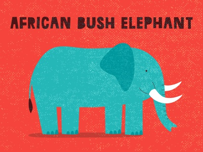 African elephant illustration vector logo minimal trunk tusks animal mammal bush elephant african arfica