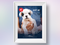 Shelter Adoption Poster
