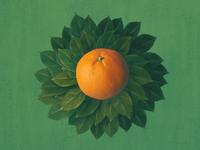 Graduated tangerine