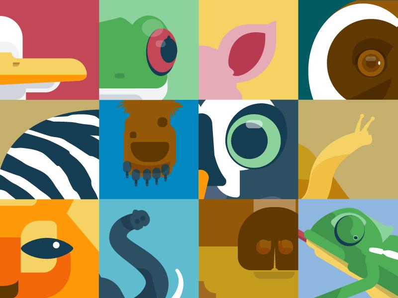 Animals animals illustration vector minimalist