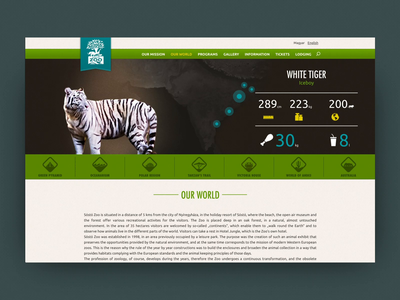 Sosto Zoo website web video ux ui typography motion interaction design animation