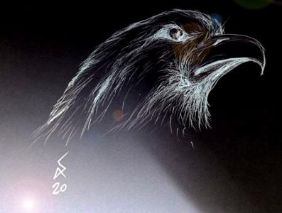 Hight bird fullstack full-stack developer freelance designer freelancer shahrokhi amin shahrokhi arts artist bird art birds drawing bird artwork bird clipart bird design birds bird