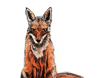 Fox Illustration fox illustration fox drawing character design photoshop pen fox illustration