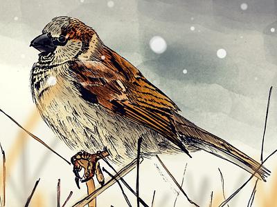 Sparrow bird illustration bird sparrow photoshop pen drawing illustration