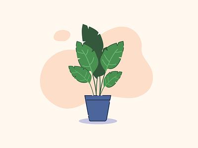 A friendly house plant - Rive design motion graphic design rive plants illustration animation motion design motion graphics