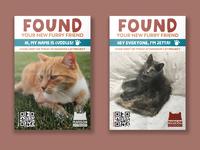 Cat Adoption Shelter Flyer