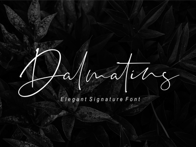Dalmatins // Elegant Signature Font font branding simple illustration typography script font script luxury stylish signature natural minimalist logo feminime fashion exclusive elegant classic casual business