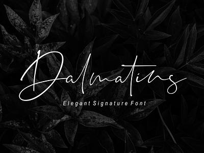 Dalmatins // Elegant Signature Font font branding simple illustration typography script font script luxury stylish signature natural minimalist logo feminime fashion exclusive elegant classic casual business