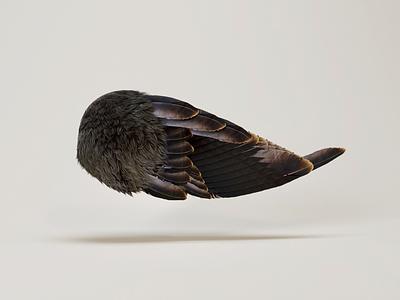 Bird Wing feathers wing bird c4d illustration 3d