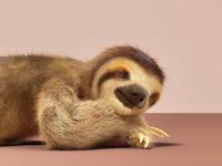 Sleepin sloth