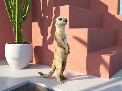 Poolside Meerkat rose pink cactus summer vibes architecture mammal meerkat illustration c4d 3d