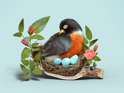 Sleeping Robin still life cross section sleep flowers eggs feathers bird robin animal illustration c4d 3d