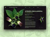 Poisonous Plants: Atropa Belladonna