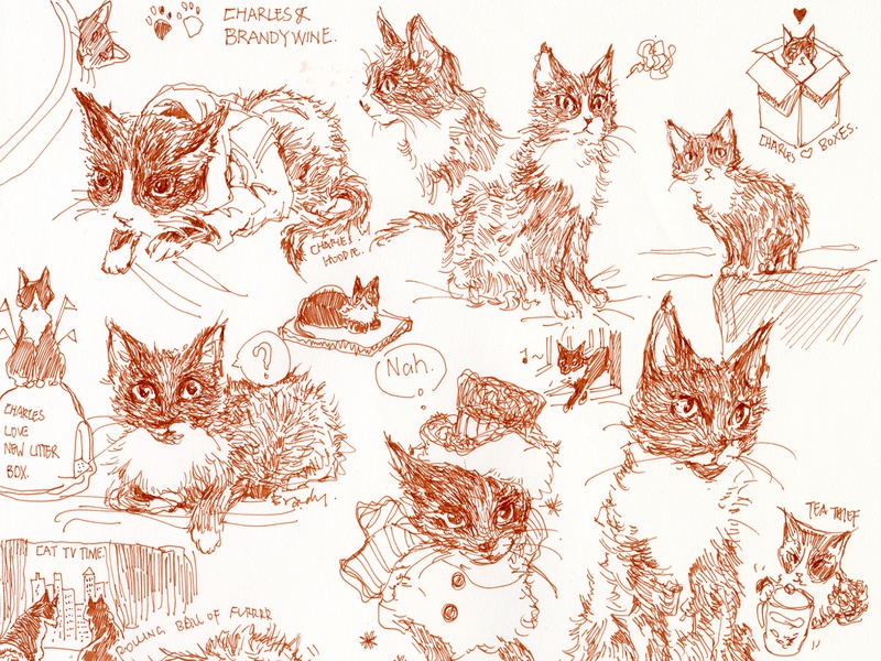 kitty sketch! sketch ink cute graphic cat illustration illustration cat