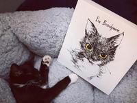 Brandywine the cat