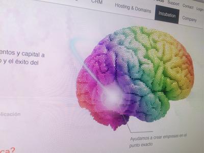 Brain incubation