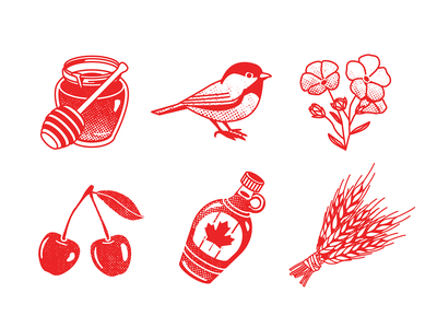Canada travel book vector bird illustration maple bottle cherry flowers bird honey canada