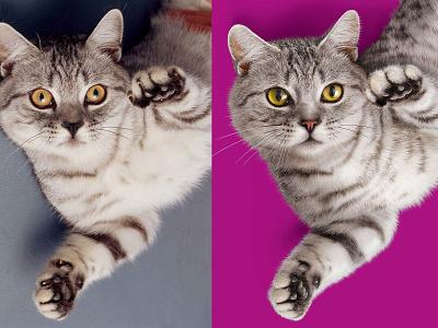 Cat packaging cat drawing retouch retouche photo retoucheur key visual illustration photoshop retouching