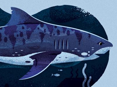 Astute Plug-in Tutorial timelapse tutorial shark illustration