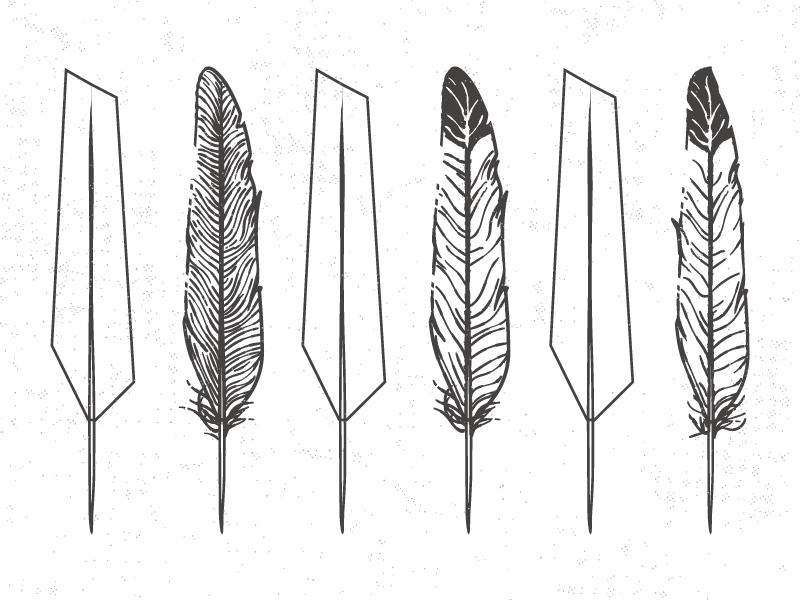 Feathers illustrator bird grey white black feathers