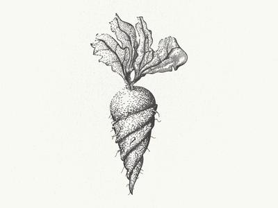 Die verdrehte Wurzel illustrator deutsch german mangled gnarled turnip beet rutabaga carrot vegetable root twisted