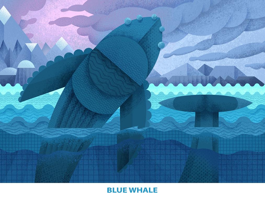 Endangered Blue Whale nature modern art modern sea creature ocean sea blue whale whale spieces endangered animal endangered digital illustration drawing digitalart contemporaryillustration contemporary characterdesign character art animals