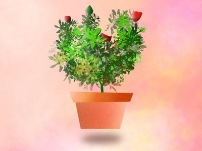 Procreate Illustration - pot_plant_rose