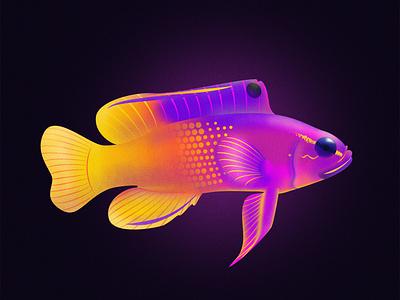 Royal Gramma Fish vector design series noise shadow noise illustrator illustration illustraion fishes fish