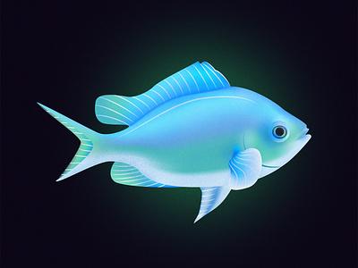 Blue Green Chromis Fish design vector series noise shadow noise illustrator illustration illustraion fishes fish