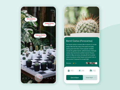AR Cactus Exploring App explore navigation article plant colorful green page sarvan cactus creative ui ux minimal design android ios screen vr app ar