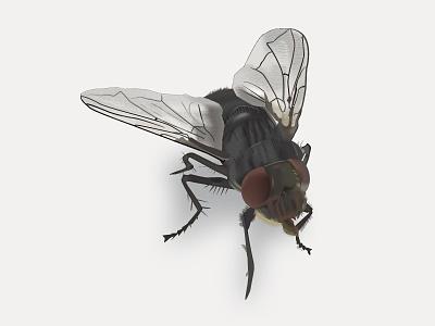 Fly illustration vector