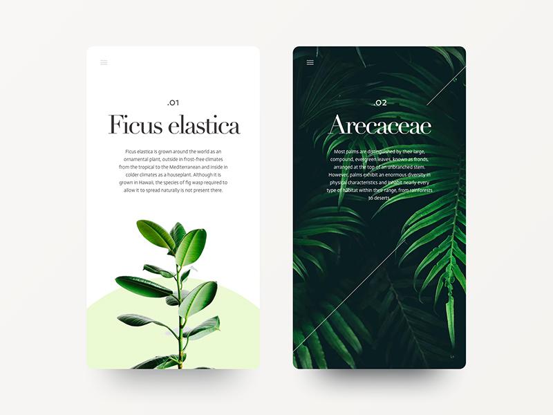Fonts & Foliage didot nature green foliage plants minimal photography typography